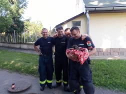 A tűzoltók karjaiban a mentett kiskutya
