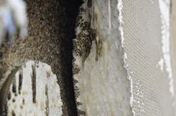 Homlokzati hőszigetelő rendszerek gyúlékonyságát vizsgálták